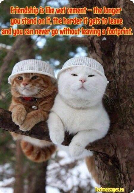 Top 50 Nice Best Friend Quotes And Best Friend Wishes