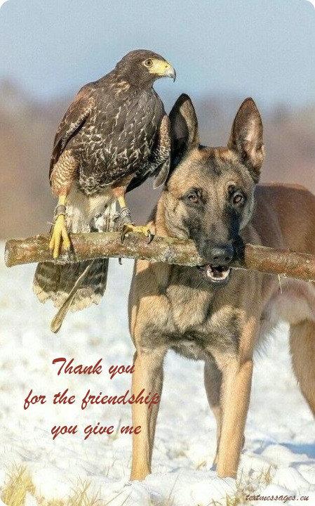 best friend wishes ecard
