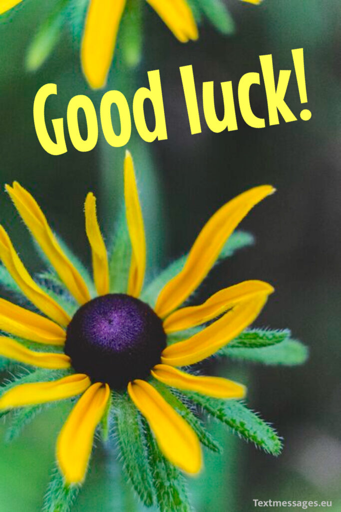Good luck wishes for future