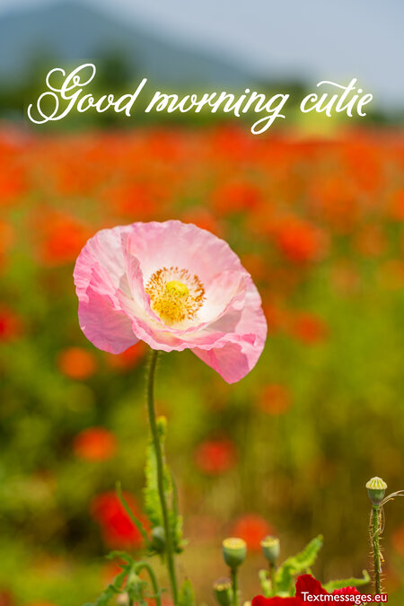 Cute Good Morning Messages For Her Girlfriend Or Wife Celebrate with unsplash's fine collection of good morning images, carefully cultivated and professionally shot for all to use! cute good morning messages for her