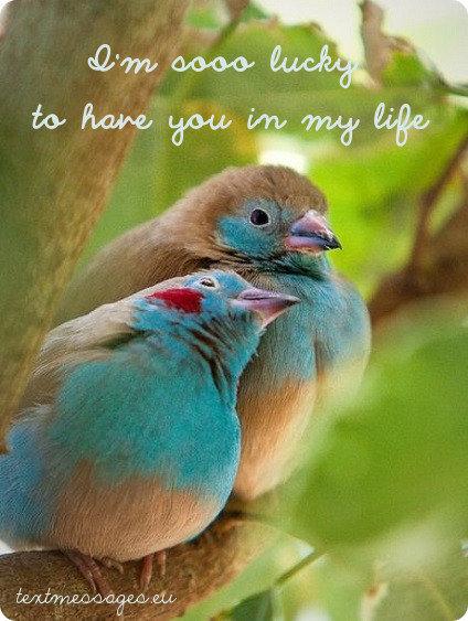 sweet love ecard