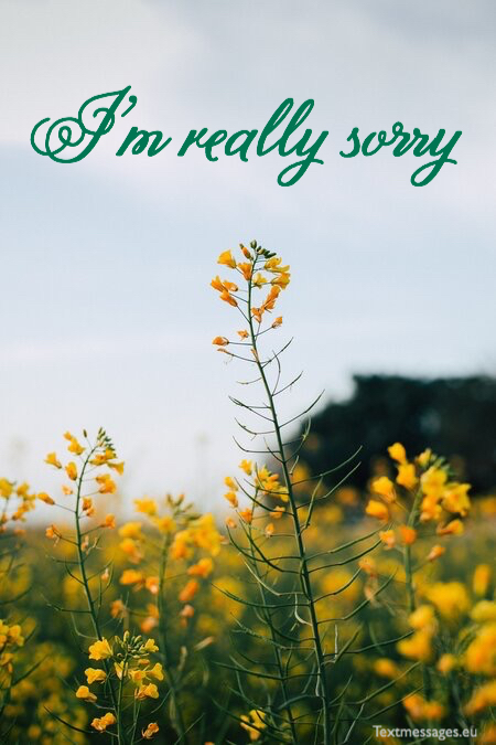 Touching sorry quotes for him