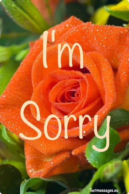 touching sorry words for wife